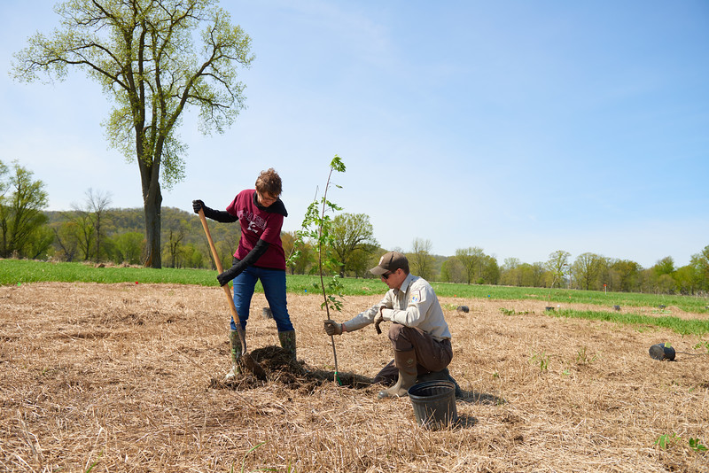 2017_UWL_Biology_Tree_Restoration_Meredith_Thomsen_Flood_Plain_0091.jpg