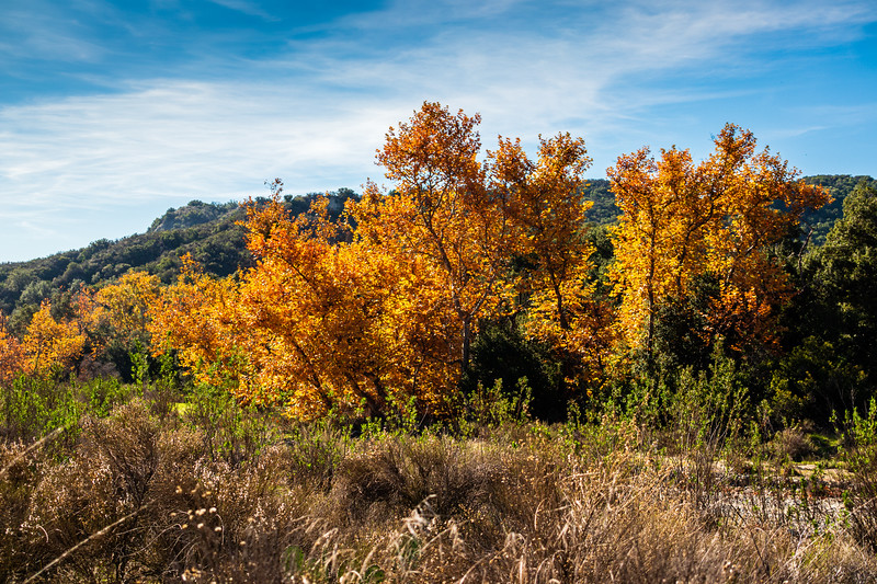 Ronald Caspers Wilderness Park, Orange County, California, United States