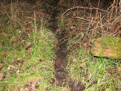 20061127 Raccoon Trail