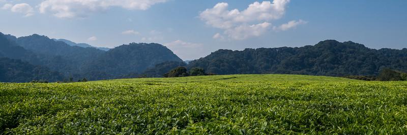 Nyugwe-Rwanda-8.jpg