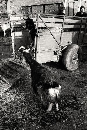 1979 - Foire aux bestiaux