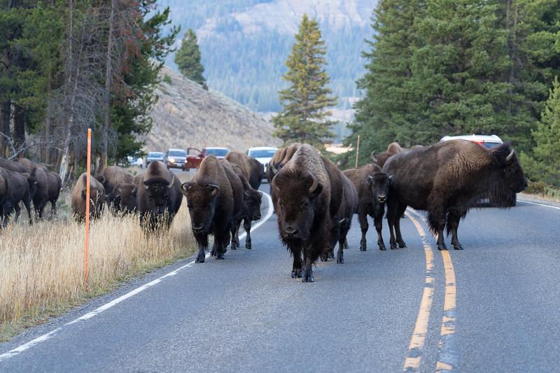 Yellowstone-73.jpg