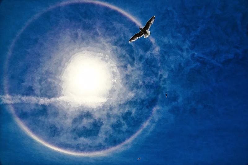 sun dawg seagull.jpg