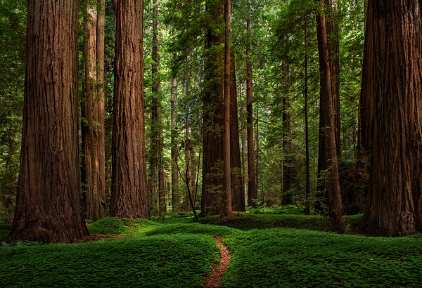 California Forests