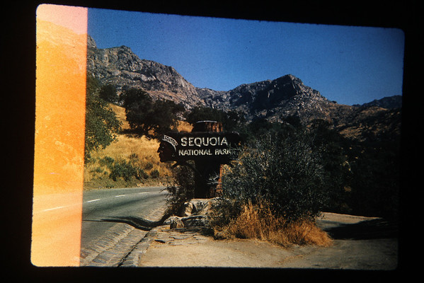 Mike and Pete's Trip To Sequoia 1963
