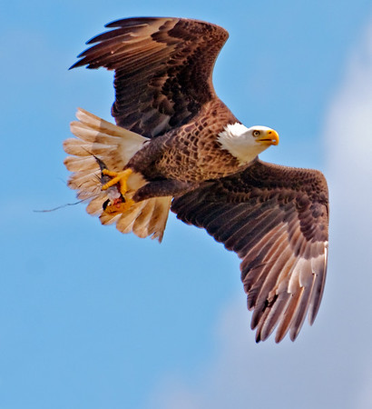 Eagle's Nest Prairie Lake Rd - March 5, 2011