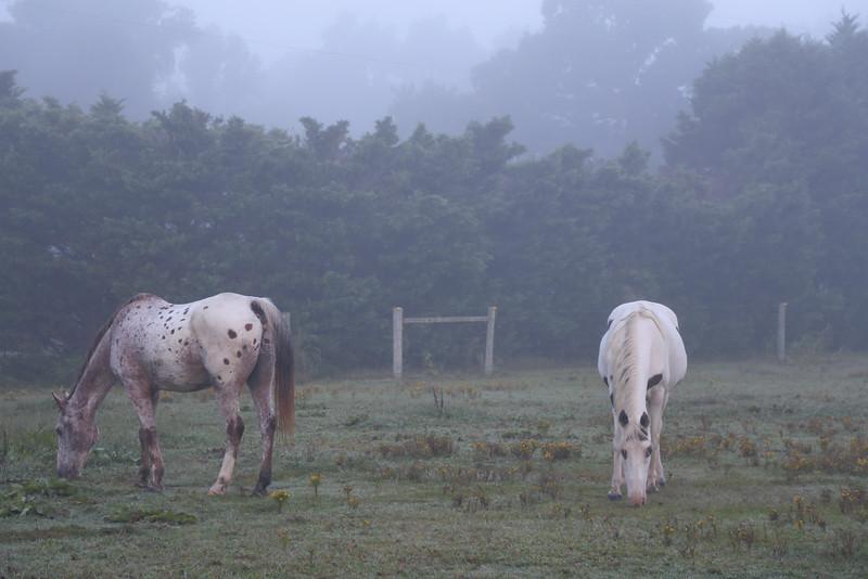 foggy sundance morning-2.jpg