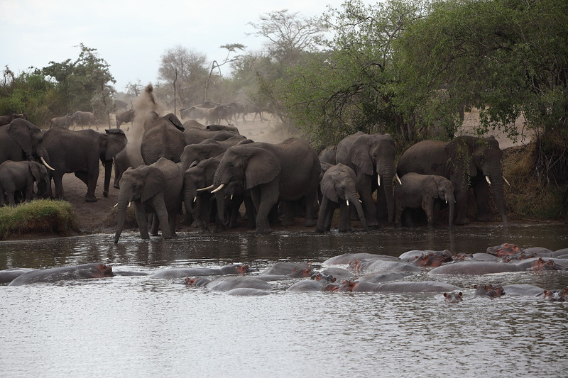 Elephants at the Water Hole.JPG