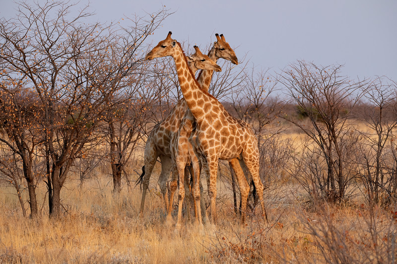Namibia 69A7545.jpg