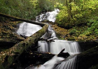Alarka Laurel Red Spruce Bog, NC