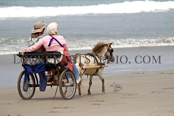 Horses at Morro Bay July 2016