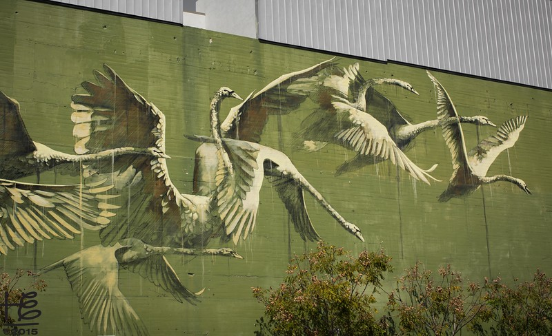 Swan street art