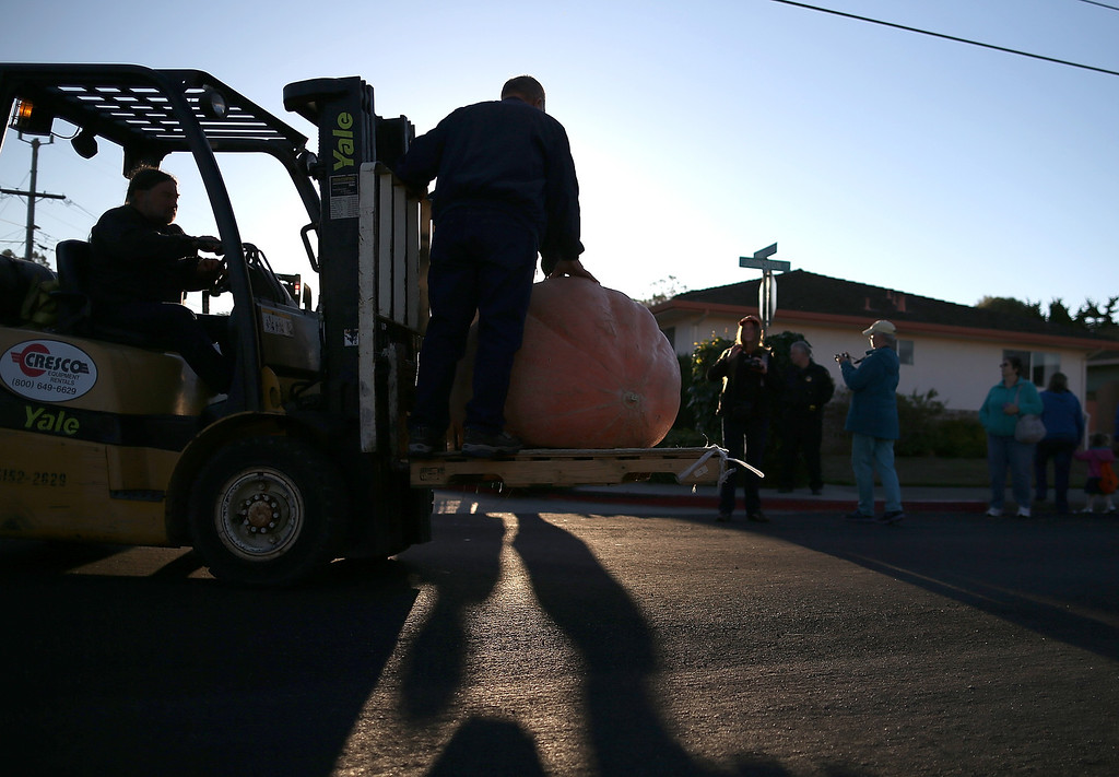 . Workers use a forklift to move giant pumpkins during the 40th Annual Safeway World Championship Pumpkin Weigh-Off on October 14, 2013 in Half Moon Bay, California.  (Photo by Justin Sullivan/Getty Images)