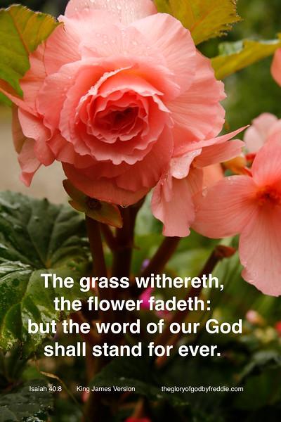 Isaiah 40-8  d.jpg