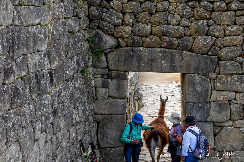 2018 Machu Picchu-64.jpg