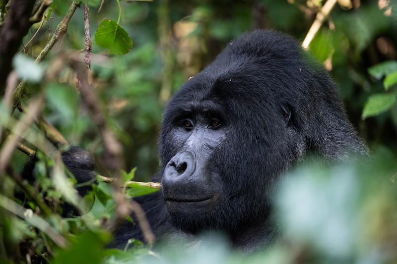 Uganda_T_Gor-1820.jpg
