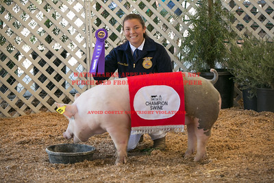 2017 Chino Fair - Swine