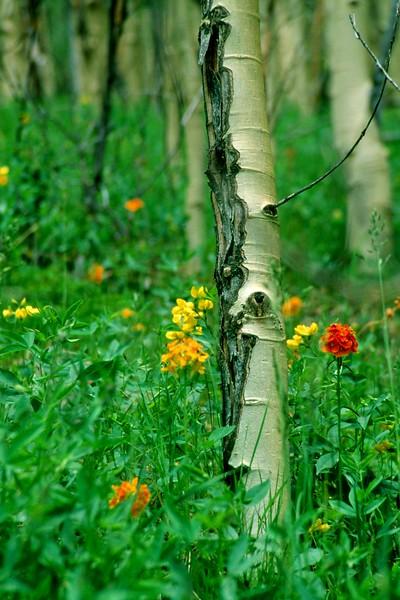 amh FLOWERS (1296).jpg