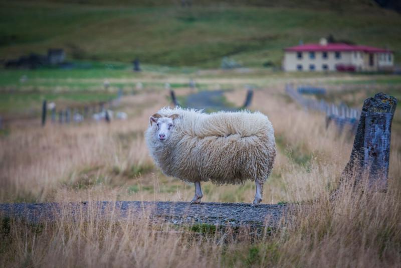9704-Iceland-Paul-Hamill.jpg
