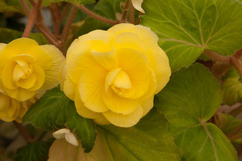 2009 09 06_White Flower Farm_0137.jpg