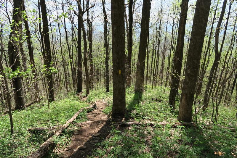 Pinnacle Mountain Trail - 3,200'