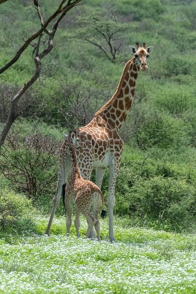 Jay Waltmunson Photography - Kenya 2019 - 080 - (DSCF1242).jpg