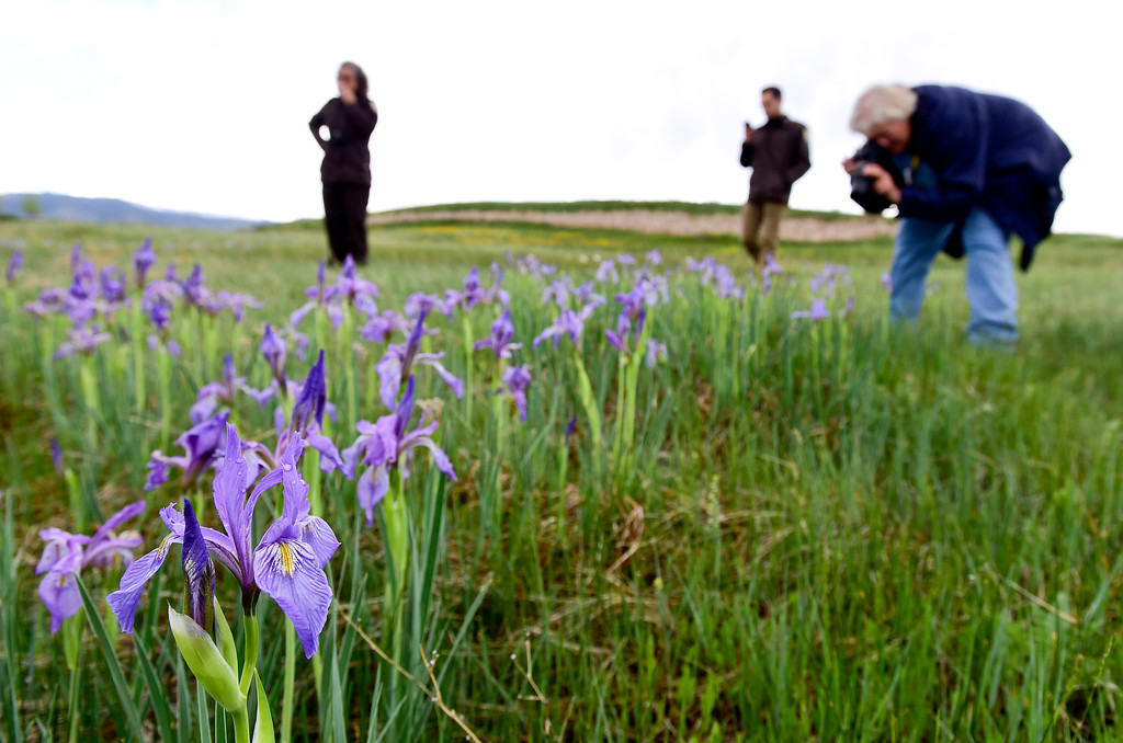 . Sharon Bokan, a volunteer and former engineer at Rocky Flats, right, photographs Wild Iris flowers, Iris missouriensis, at the Rocky Flats National Wildlife Refuge in Jefferson County, Colorado on May 14, 2018. (Photo by Matthew Jonas/Staff Photographer)