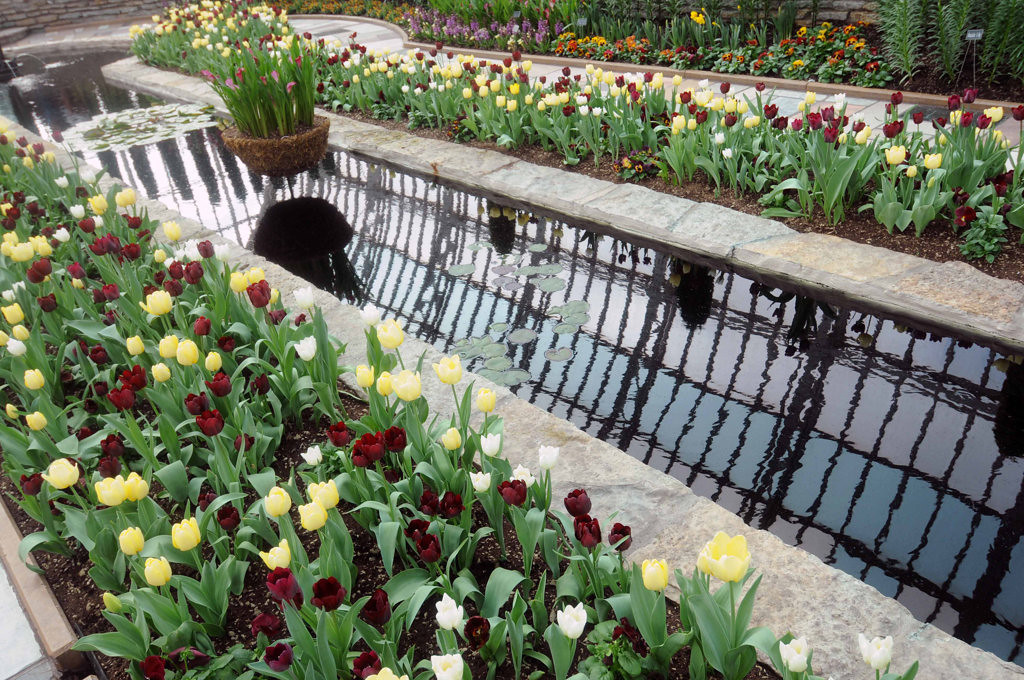 . Tulip beds border a pond in the Sunken Garden at the Como Conservatory. Tulips, hyacinth, Asiatic lilies, calla, bearded iris, allium, crocus and grape hyacinth are among the featured flowers this year.  (Pioneer Press: Scott Takushi)