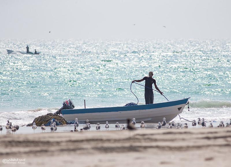 Sardine Season (4)- Dhofar.jpg