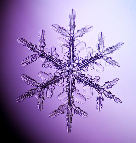 snowflake-3060-Edit.jpg