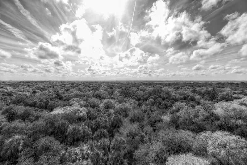 Above the treetops at Myakka River State Park
