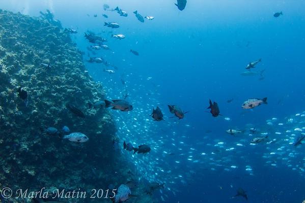 Palau Blog