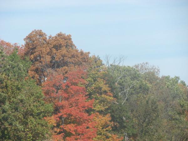 Fall pics 2008 056.jpg