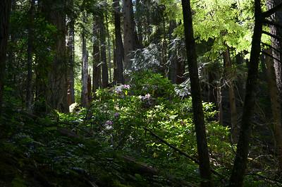 Oregon roadtrip - July 2014