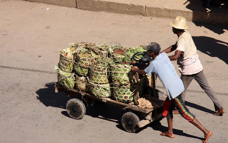 Madagascar7-Oda.jpg