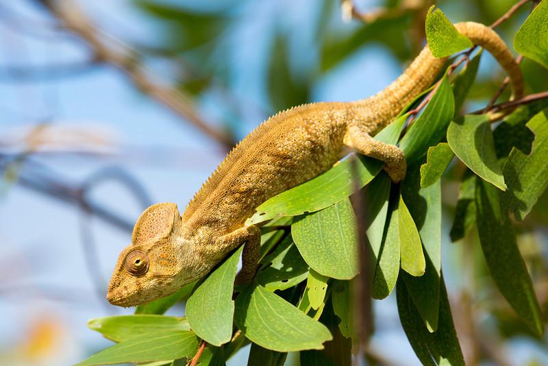 Madagascar_2013_FH0T2104.jpg