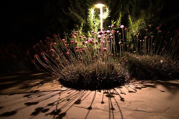 SF Garden