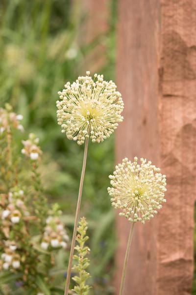 KoRedfield-Floral15.jpg