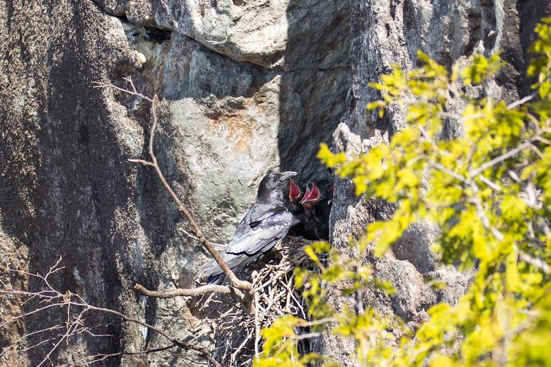 Ravens Nest-8140.jpg