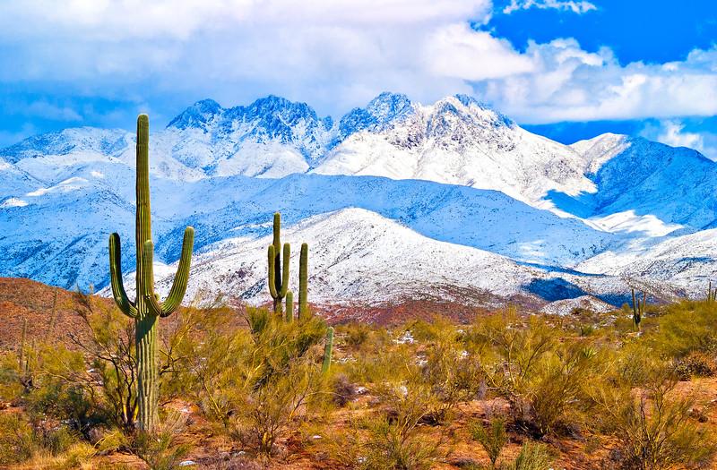 8272* Sonoran Desert