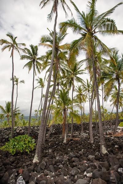 Hawaii2019-355.jpg