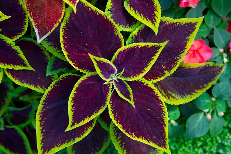 Day-2-Rita-Plants-Flowers