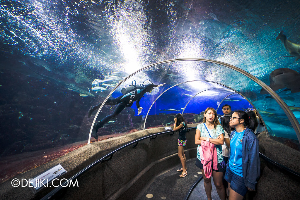 Underwater World Singapore - Tunnel with unimpressed mother