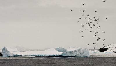 Ice & Landscape