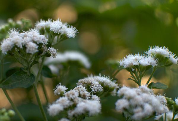 Quick Flowers