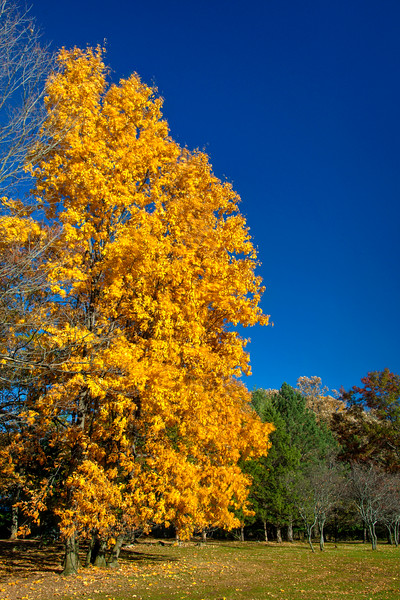 20201031 Fall Foliage