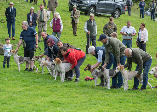 Vale of Rydal Sheepdog Trials and Hound Show