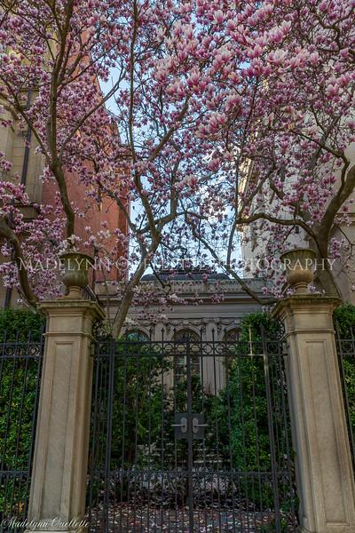 Magnolia Sentries