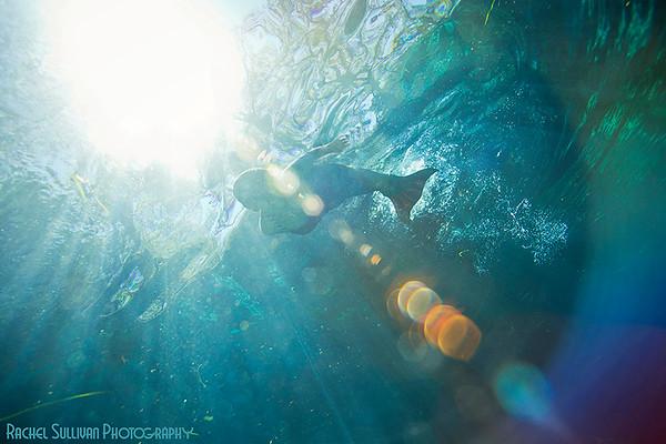 Ocala Springs Underwater Photography