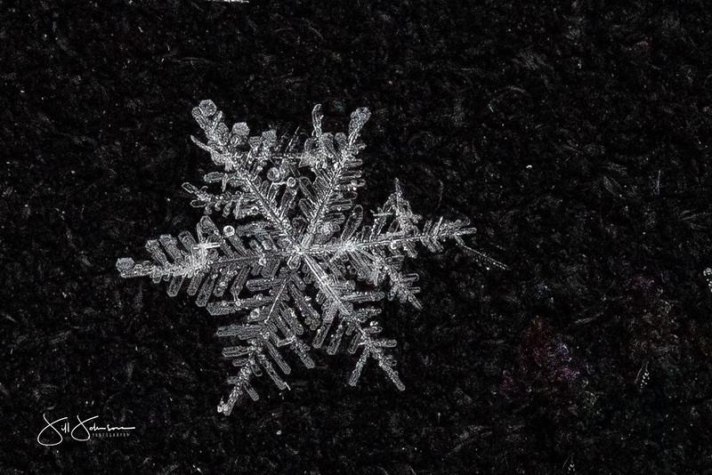 snowflakes-1233.jpg